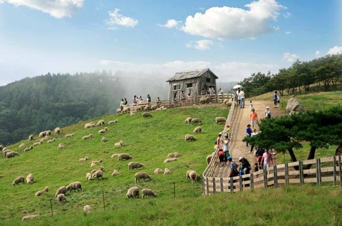 Tham quan thảo nguyên dê NewZealand